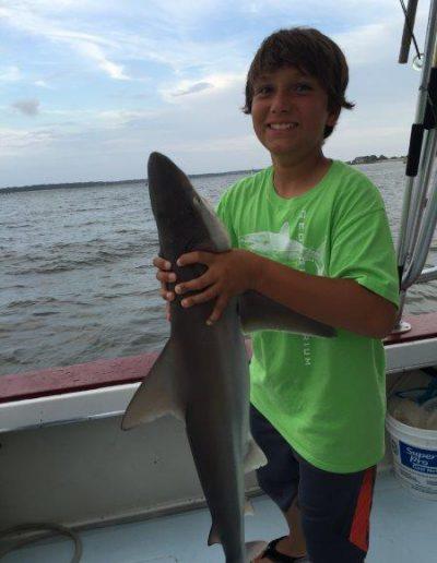 will-shark-2-HH-